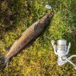 catch trout with lures