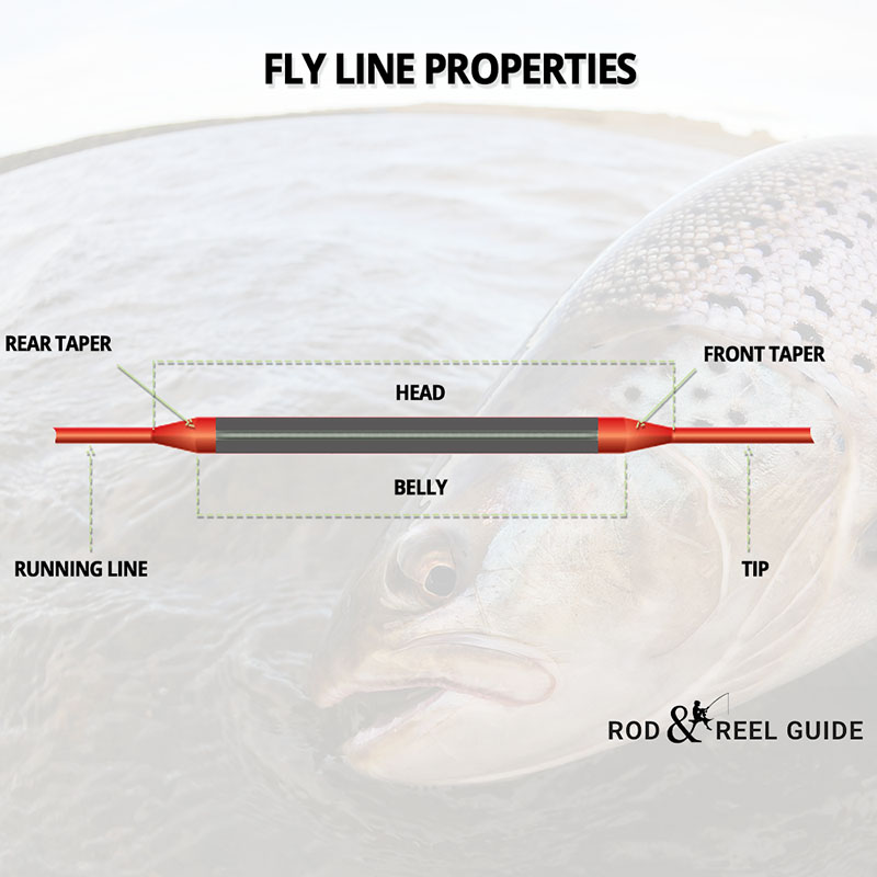 fly line properties and tapers